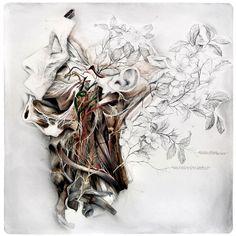 nunzio paci: Still life with silk camellias / Natura morta con camelie di seta Nunzio Paci, Art Et Nature, A Level Art Sketchbook, Art Du Monde, Human Body Art, Medical Art, Anatomy Art, Human Anatomy, Ap Art