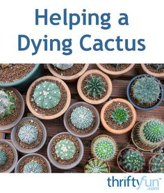 1000 Images About Gardening On Pinterest Houseplant To