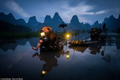 The art of fishing: People from southern China have used cormorants to help them fish for more than 1,000 years, however the tradition is dying. Pictured is Blackbeard,the youngest of the last fishermen in the village of Xingping