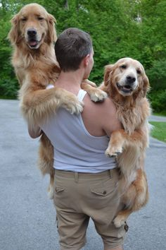 bromance with golden retrievers