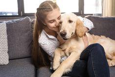 Golden Retriever Training, Dogs Golden Retriever, Labrador Retriever, Curly Coated Retriever, Big Dog Breeds, Nova Scotia Duck Tolling Retriever, Goldendoodle, Big Dogs, Dog Friends