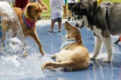 Tips To Keep Pets Cool & Safe In Extreme Summer Heat | Gardening Life | Scoop.it