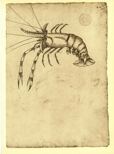 Fresh Water Shrimp Illustration  Fauna of by CarambasVintage