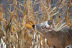 Deer Hunting Tips: 6 Tactics for Late-Season Bucks