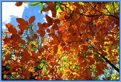 Bunte Herbstzeit 4/Autumn time 4/秋季时间4/خريف الوقت 4