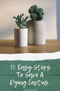 You can revive your dying cactus by following one of these 10 quick steps. You might need to fix root rot, monitor watering, temperature, and light, repot the cactus and change the soil, use a fertilizer, or just give the plant some time to revive on its own. #cactuscare #cactuscareindoor #cactuscaretipsindoor #cactuscaretips #cactuscareguide Indoor Cactus, Cactus Plants, Cactus Care, Desert Flowers, Water Wise, Drought Tolerant Plants, Types Of Plants, Fairy Gardens, Just Giving