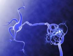 Imagina el poder de la mente: la plasticidad cerebral. Plasticidad Cerebral, Neon Signs, Brain Parts, Mind Power, Neuroscience