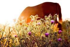Horses Serie 23