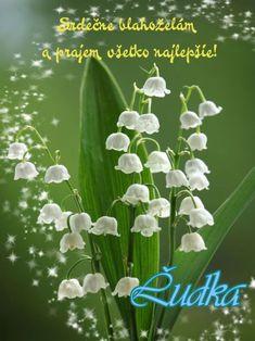meninové priania September, Plants, Blog, Blogging, Plant, Planting, Planets