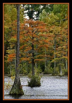 Fall in the swamps and ponds of Eastern North Carolina, US