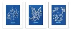 Image result for Anna Atkins