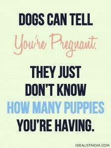Dogs can tell you're pregnant even in the first trimester. They just don't know how many puppies you're having!