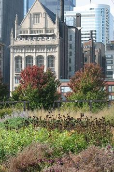 Old and new buildings stand shoulder to shoulder beyond Lurie Garden. In the foreground, the rust, copper, and tan hues of autumn play across the grasses, perennials, and ornamental trees.