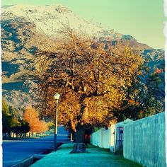 Located in a fertile valley cradled by mountains, the town of Villiersdorp is as charming as you'll ever visit. With quiet streets lined with… The Places Youll Go, Places To Visit, Sa Tourism, Provinces Of South Africa, Cape Town South Africa, Countries Of The World, Small Towns, Where To Go, Old Houses