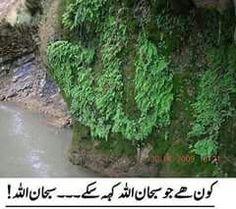 Subhan Allah Allah, Best Islamic Quotes, People Quotes, Quran, Herbs, Nature, Plants, Outdoor, Desktop Screenshot