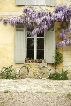 lovely white and wisteria