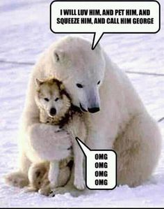 This pic is real. A polar bear came for multiple days to play with the dogs of a sled team. When the bear first arrived the owner of the dogs thought they were goners. Never once did the bear harm the dogs. Cute Baby Animals, Animals And Pets, Funny Animals, Wild Animals, Arctic Animals, Polar Bears Live, Baby Polar Bears, 3 Bears, Animal Captions