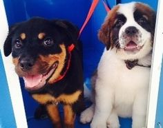 Two puppies in The Pooch Mobile dog wash