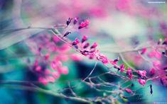Flores De Fondo De Pantalla - Imagen En Hd 3 HD Wallpapers