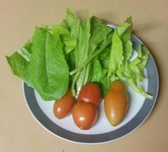 vegepod fresh lettuce and tomato