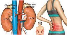 L'affaticamento surrenale o stanchezza surrenale, è una condizione di salute che colpisce la maggior parte della popolazione senza saperlo dato che i suoi sintomi possono essere confusi con altre patologie.