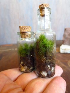 Our Itty Bitty Terrarium Set....Terrarium Miniature Terrarium Indoor Garden Apartment Garden Live Moss Miniature Green Modern Gift. $15.60, via Etsy.