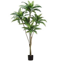 5'6' Dracaena Silk Tree w/Pot -2 Tone Green (pack of 2) >>> Click image for more details.