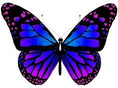 Joshua@Gilberthorpe School: Butterflies by Dee White