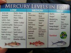 Mercury levels in fish