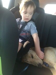 Crash is one of Pawsitive Service Dog Solution's most recently graduated dogs, seen here with his forever boy. www.pawsitivesolutions.org