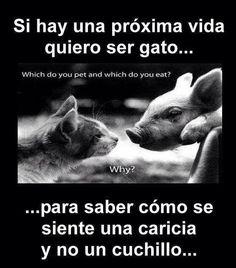 Quiero ser gato #animales # #derechos #liberación #animals #rights #liberation