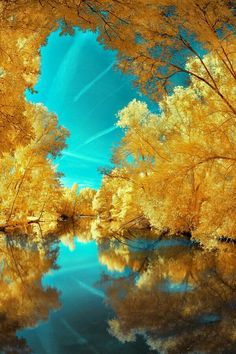 Ideas For Photography Nature Summer Scenery All Nature, Amazing Nature, Beautiful World, Beautiful Images, Beautiful Sky, Beautiful Scenery, Beautiful Things, Yellow Tree, Yellow Leaves