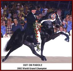 Tennessee Walking horse - OUT ON PAROLE #970569 home page by Walkers West