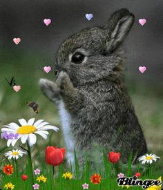 Happy Easter and Passover, everybody!  #easter #passover #bunny #gifs