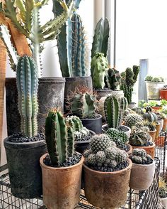 I Would Love To Get Cactus/succulents! I Need More Plants In My Life.