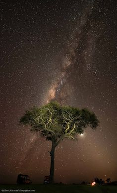 ✿⊱╮Campfire under the Mara Stars - Kenya, Africa Sky Moon, Stars And Moon, Beautiful Sites, Life Is Beautiful, Beautiful Places, Out Of Africa, Kenya Africa, Kenya Travel, Wild Nature