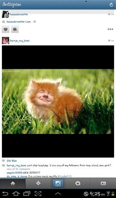 This is great. lol. I seriously want an orange male cat and name him Ed Sheeran. xD