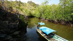 With Longtailboot through the Mangroves in Koh Tarutao