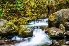 'Mountain Stream' -  Klamath National Park,