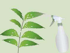 Les pucerons et cochenilles et bien d'autres nuisibles peuvent provoquer de sérieux dégâts aux fleurs, fruits et légumes. Ces créatures attaquent votre jardin par milliers en retirant littéralement la substance vitale de vos bourgeons et en...