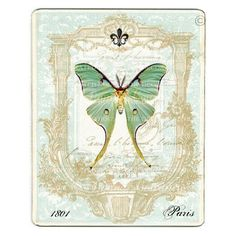 Luna moth scientific illustration - photo#22