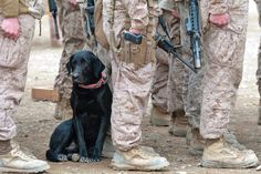 A military working dog sits patiently next to his U.S. Marine handler during a memorial service for fallen Explosive Ordnance Disposal members.