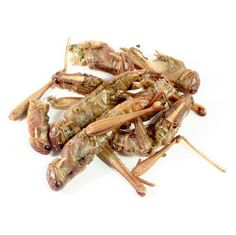 Edible Bugs & Edible Insects.