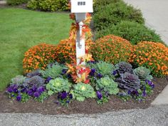 This variety gains its colors early in the season and is slow to bolt. PLANT SEEDS:Outdoors after frost / Indoors weeks before last frost. Mailbox Plants, Fall Mailbox, Purple Flowering Plants, Cabbage Flowers, Ornamental Cabbage, Mailbox Landscaping, Winter Flowers, Fall Plants, Autumn Garden