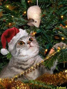 =^. .^= Christmas Cats =^. .^=