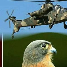 Augusta Westland, South African Air Force, Attack Helicopter, War Machine, Military, Apartheid, Helicopters, Choppers, Rotary