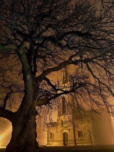 Foggy Night, Straffan, Ireland