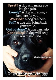 Dog Quotes, Animal Quotes, New Puppy, Puppy Love, Pet Dogs, Dogs And Puppies, Dog Ramp, Dog Best Friend, Dog Ages