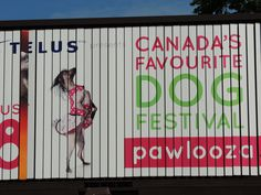 This is my dog Willow, on a billboard promoting Pawlooza, a local festival for dogs that promotes rescues.