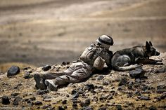 Military Working Dogs In Afghanistan | US Marine Combat military working dog Afghanistan 2011